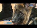 «Уверенность и верность» дог-шоу собак-проводников провели в Новосибирске