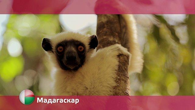 Орел и решка Мадагаскар