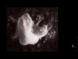 Patti Smith - White Rabbit