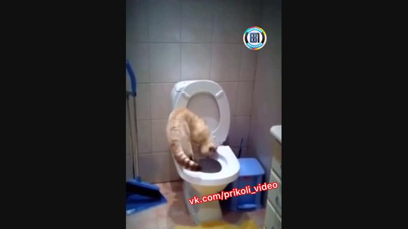 Научите так моего кота