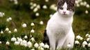 Ландыши - светлого мая привет. Песня от котэ из прошлых лет.