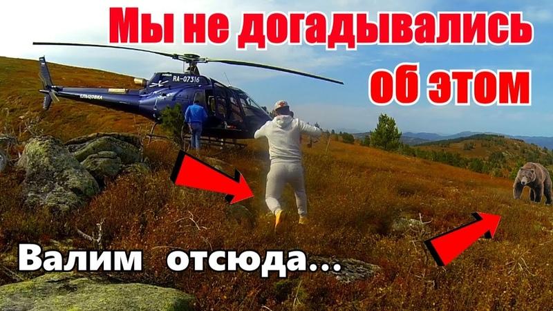 Такого мы не ожидали Повсюду медведи валим отсюда В Алтайскую тайгу на вертолетах 1
