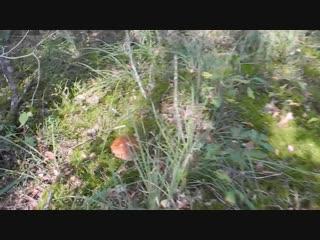 Как вырастить много белых грибов-GARDEN