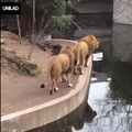 Once Upon A Time In A Zoo