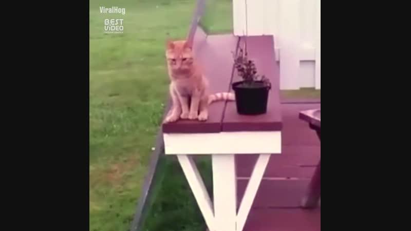 Надоело быть котом, побуду человеком 😸