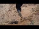 Mud challenge 2