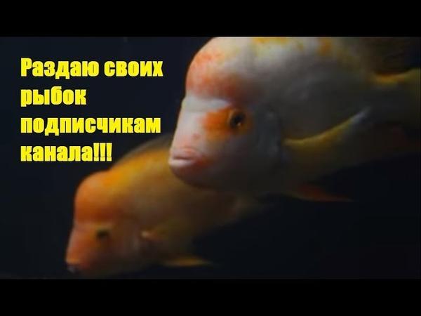 Раздаю рыбу из своих аквариумов и что дальше