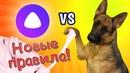 ЯНДЕКС АЛИСА СЛОМАЛАСЬ! Эрика против Яндекса. Собака делает слайм из случайных ингредиентов.