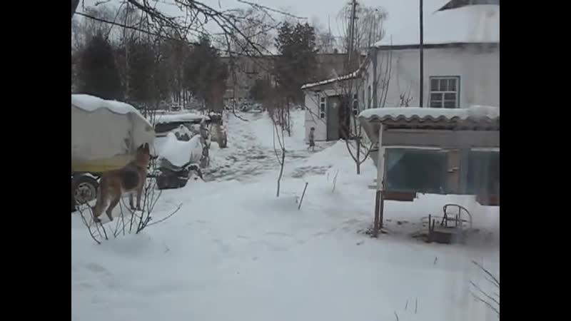 Семья Бровченко. Босиком по снегу. Он полезный для здоровья...