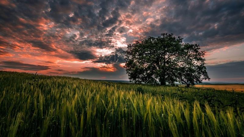 Картинка закат. Небо, природа, пейзаж, трава, закат, облака, дерево.