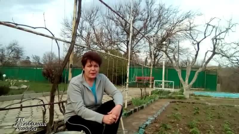 Уход за клубникой весной Чем подкормить клубнику