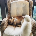 Harry Connick Jr on Instagram tuka please attack me. please attack me. i'm really cute. please att- billie ok.