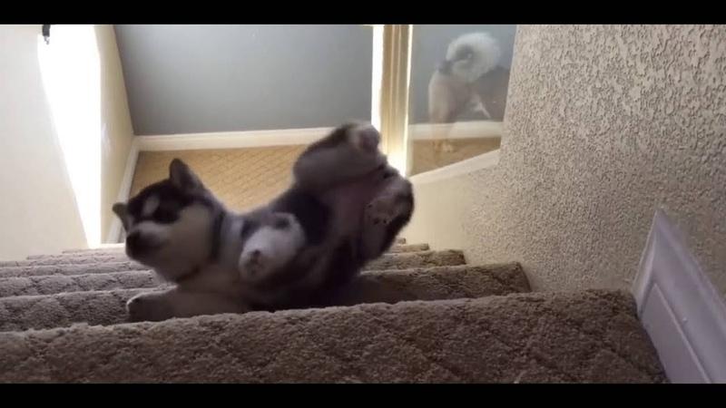 Puppies Walk Down Stairs For The First Time Cute Dog Compilation смотреть онлайн без регистрации