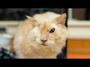 Кот, облитый кислотой, вытянул счастливый билет