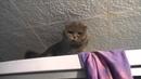 Самые смешные видео про котов. Кот психует ругается