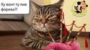 Сколько живут кошки Что влияет на продолжительность жизни кошки
