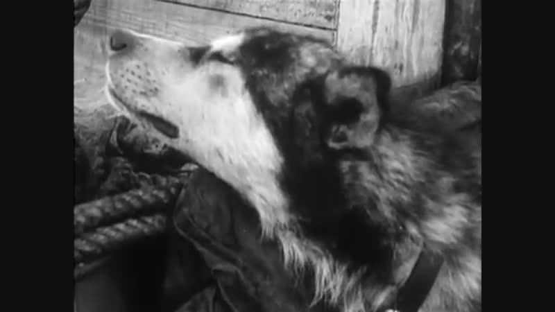 С БЭРДОМ НА ЮЖНЫЙ ПОЛЮС (США, 1930) - Лучшая операторская работа (1930-ІІ)