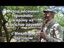 Мастер-класс по прививке яблони в крону плодового дерева с Михаилом Чертоком