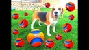 Dog Toy Critic Louie The Beagle Episode 3 : CHUCKIT KICK FETCH