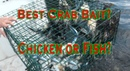 Catching Blue Claw Crabs Chicken or fish for bait