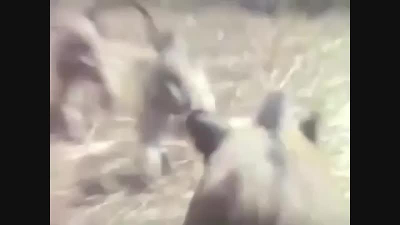 Мартышки съебались !