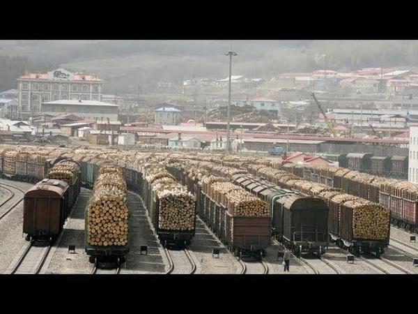 Китай уничтожает СИБИРЬ! Массовая вырубрка леса! Путин продал Сибирь Китаю