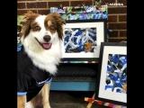 Талантливая собака-художница