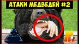 ТОП 5 АТАК МЕДВЕДЕЙ 2 серия TOP 5 ATTACKS OF BEARS (Хищники нападают) ЗИМНЯЯ ОХОТА