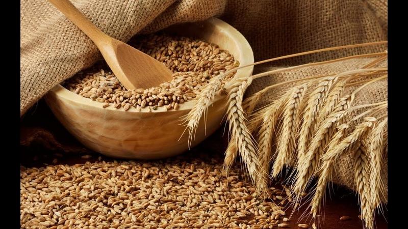 Рынок пшеницы 2018 Засуха снижение урожая