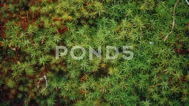 097457111-beetle-moss-close