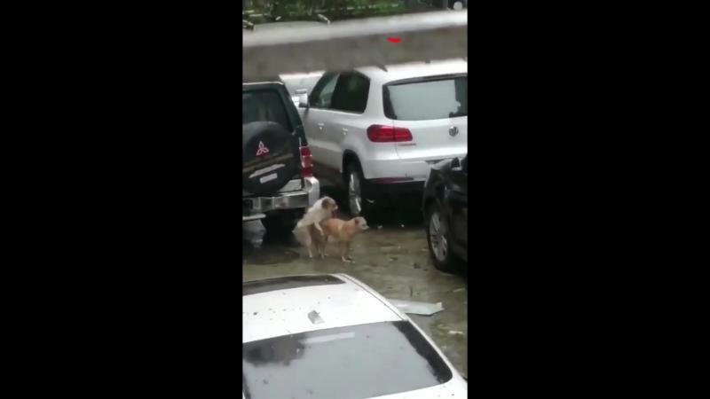 Тайфун «Мангхут» подождет