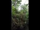 El bosque inundado