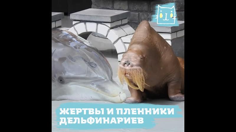 Дельфинарий океанариум тюрьмы для смертников