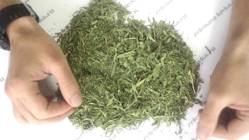 Трава стевия