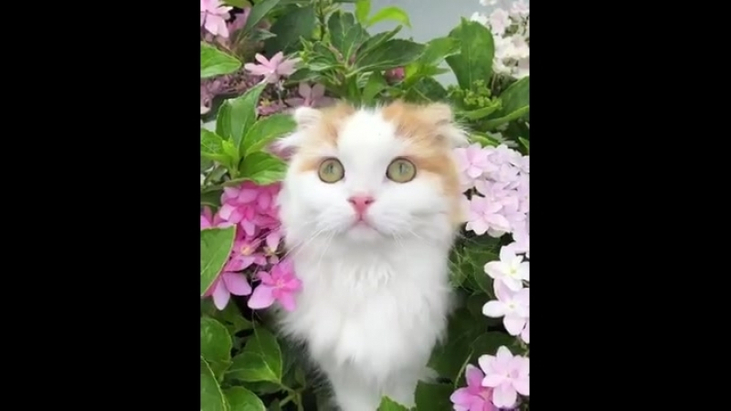 Happy Cats - She is more beautiful than flowers. 🌸🌸🌸
