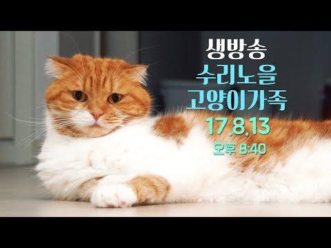 LIVE ]오늘도 팬선물 대 개봉기! 8월13일(일) 8:30PM 【SURINOEL】