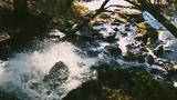 Sadist Pikachu - Осеняя Меланхолия (Official video)