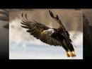 Притча про Орла в курятнике