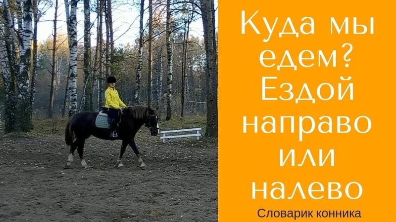 Ездой направо или ездой налево? / Словарик конника / Дивные Кони