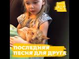 Последняя песня для любимого кота