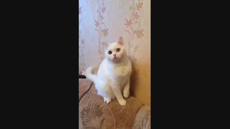 кошка Афелия