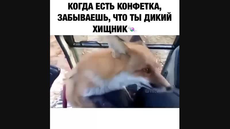 хитрая татарка лиса