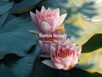 Tomba Brion I Carlo Scarpa (Colour Version)