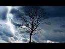 Предсказание погоды по местным признакам Yurgen охотник 28 07 2016