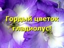 По-королевский прекрасный, гордый цветок гладиолус
