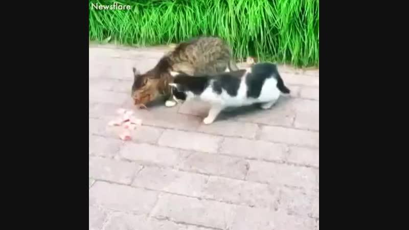 Мимимишное видео.