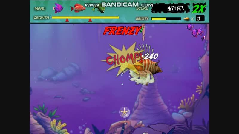 Lion fish feeding frenzy