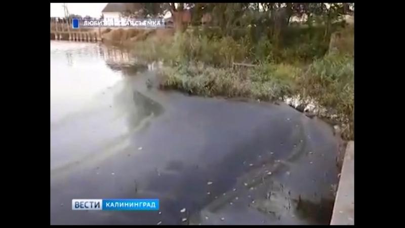 Озеро Шенфлиз покрыло чёрной плёнкой