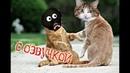 Приколы с котами – Смешная озвучка животных – ГРЕННИ и кот МУРЗИК! Засмеялся проиграл - PSO