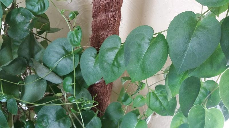 Большая пересадка комнатных растений в сентябре продолжается!
